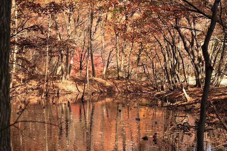 みかも山の紅葉