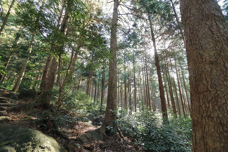 筑波山の森