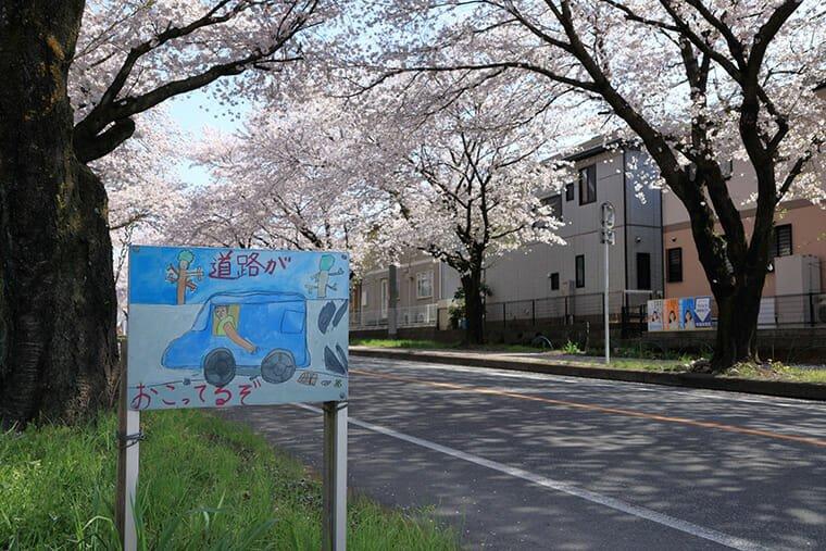 中久喜 桜並木の立て看板