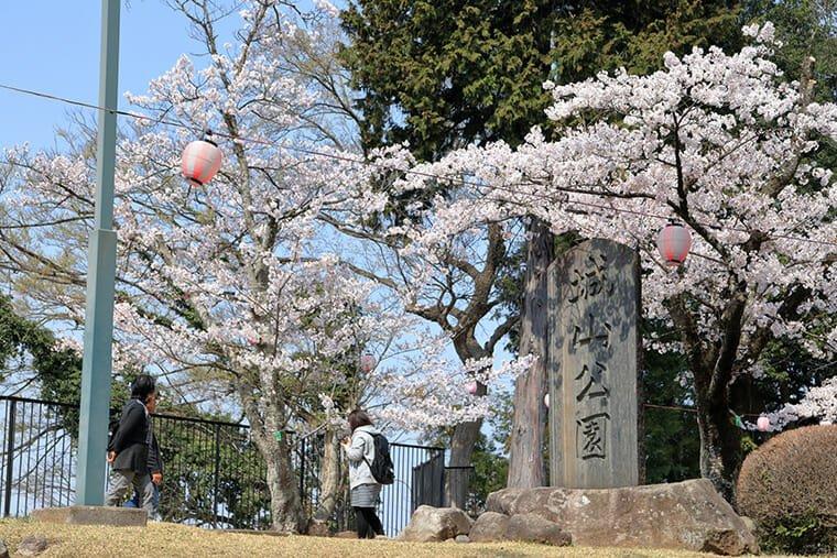 城山公園(小山祇園城跡)の桜