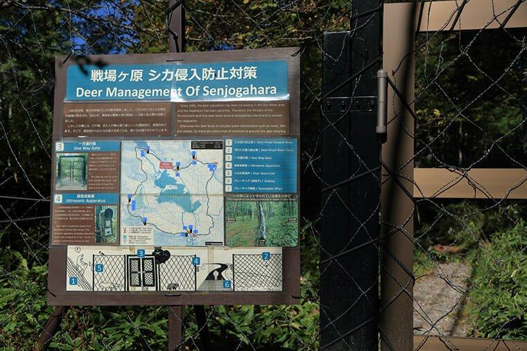 戦場ヶ原の鹿侵入防止柵