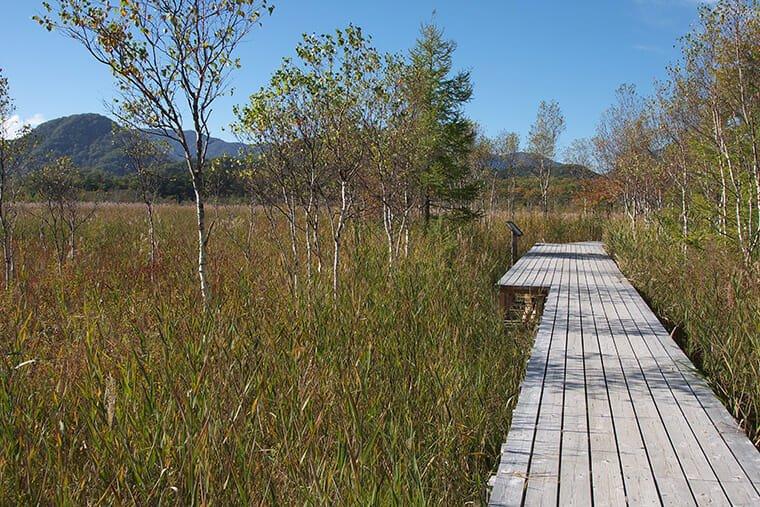 戦場ヶ原自然研究路の木道