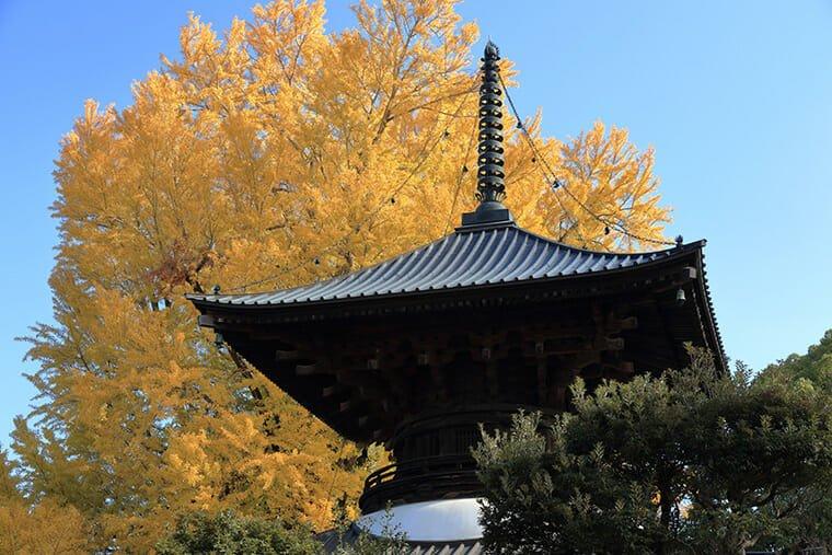 鑁阿寺の多宝塔と大銀杏