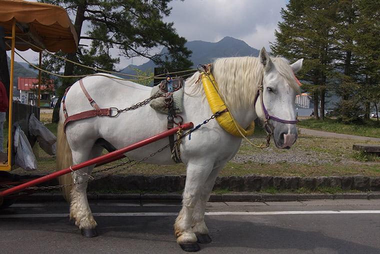 榛名湖のトテ馬車