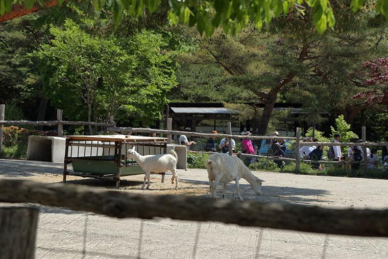 那須高原南ヶ丘牧場の動物ふれあい広場