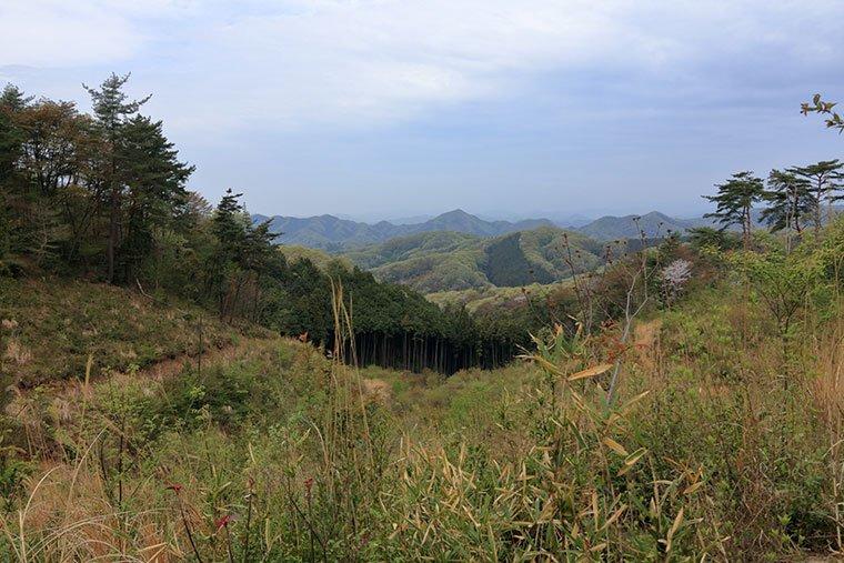 桜峠の頂上