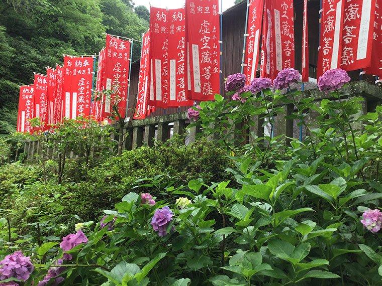 大平山神社の紫陽花