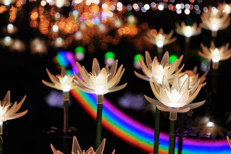 睡蓮と虹のイルミネーション
