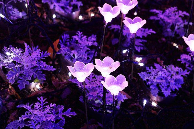 「光の庭園」のイルミネーション