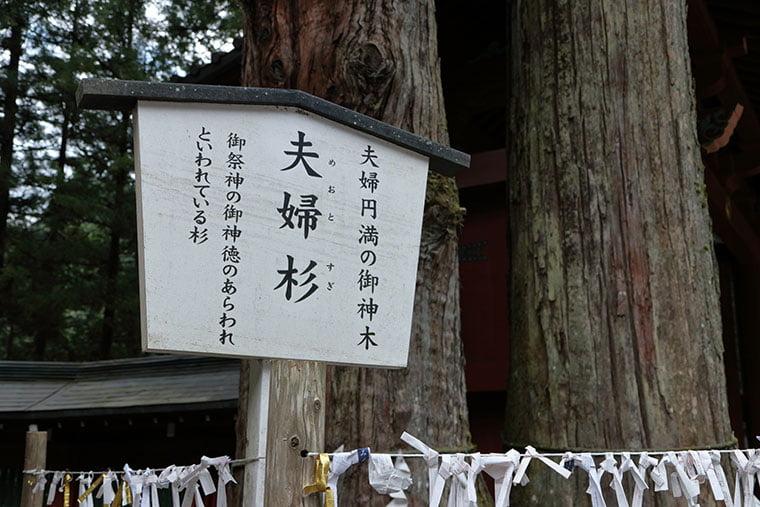 日光二荒山神社の夫婦杉