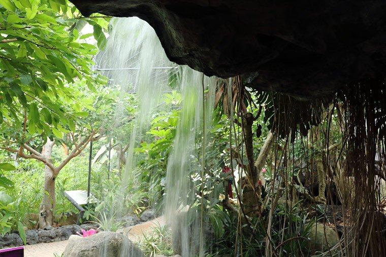 とちぎ花センターの温室内の滝