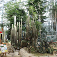 とちぎ花センターの温室のシャボテン
