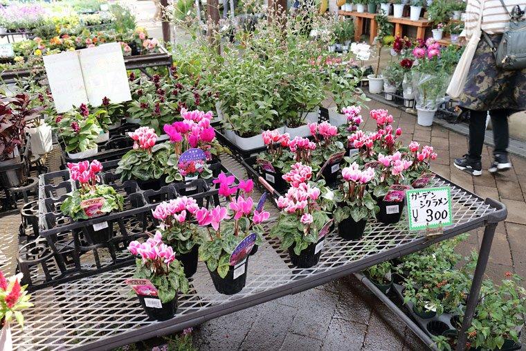 とちぎ花センターの花屋さん