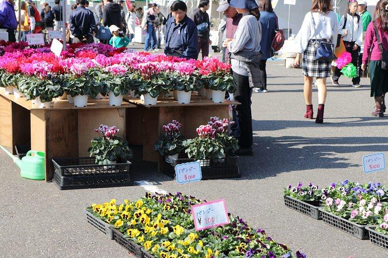 草花の販売