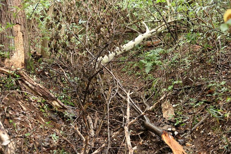 加波山の荒れた登山道