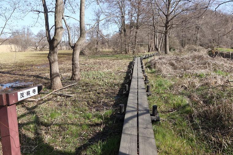 茂林寺沼公園の湿原