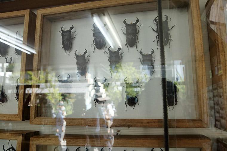 虫や ましこ工房の表本