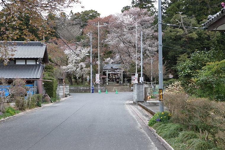 櫻川磯部稲村神社の参道