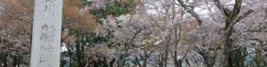 国指定「桜川のサクラ」の石碑