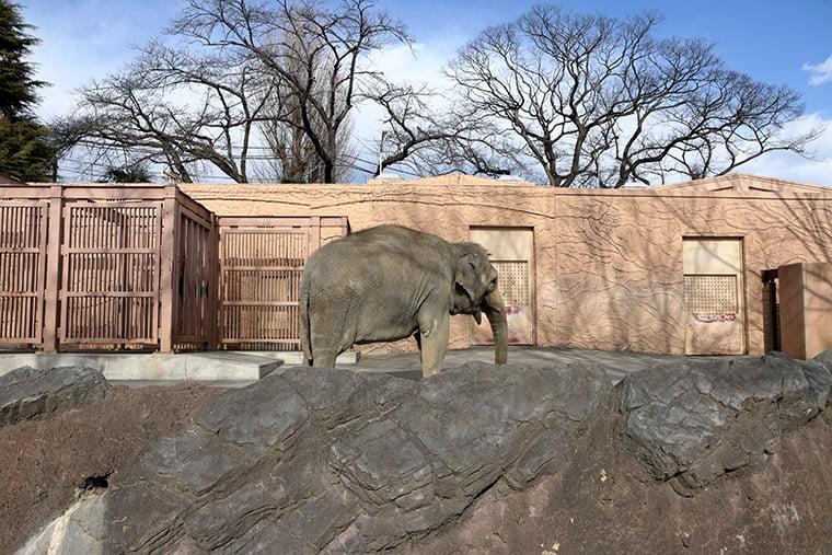 かみね動物園のゾウさん