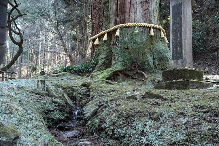 御岩神社の三本杉