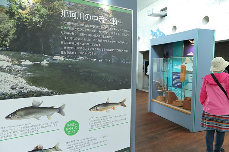 那珂川の中期コーナー