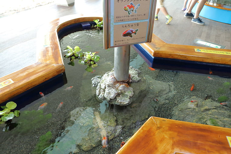 タッチング水槽の風景