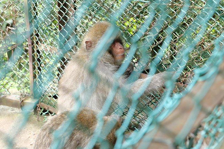 鬼怒川温泉ロープウェイの猿