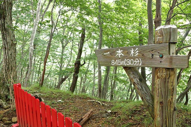 鬼怒川温泉ロープウェイにある一本杉への案内板