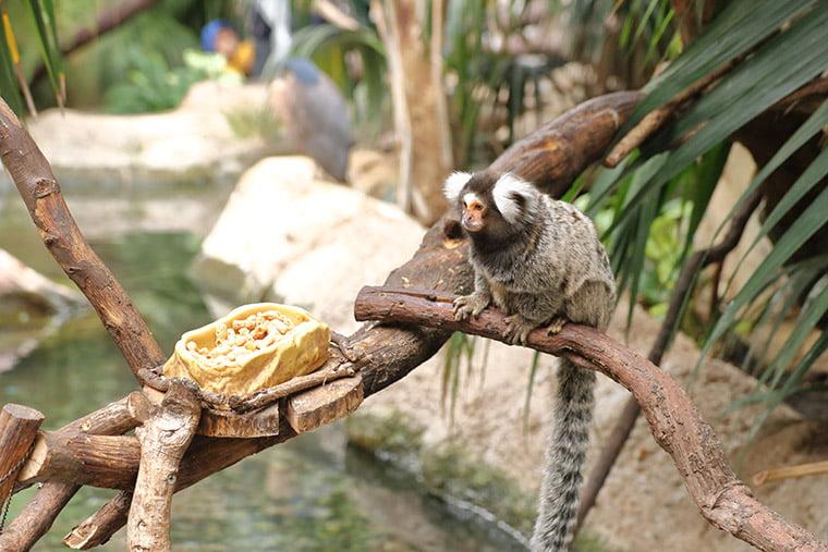 熱帯の森の小猿