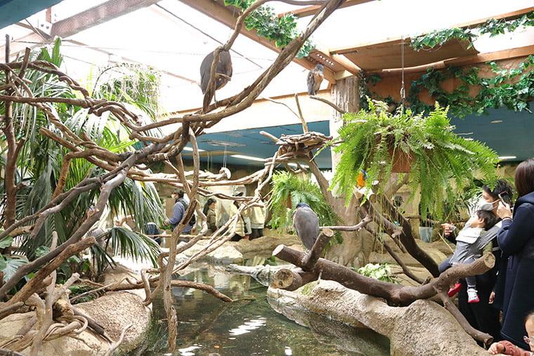 熱帯の森の風景