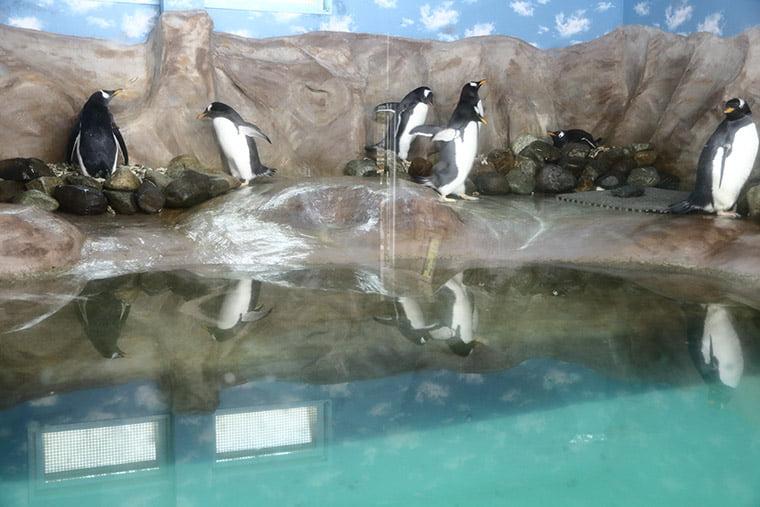 ペンギンビレッジの屋内展示