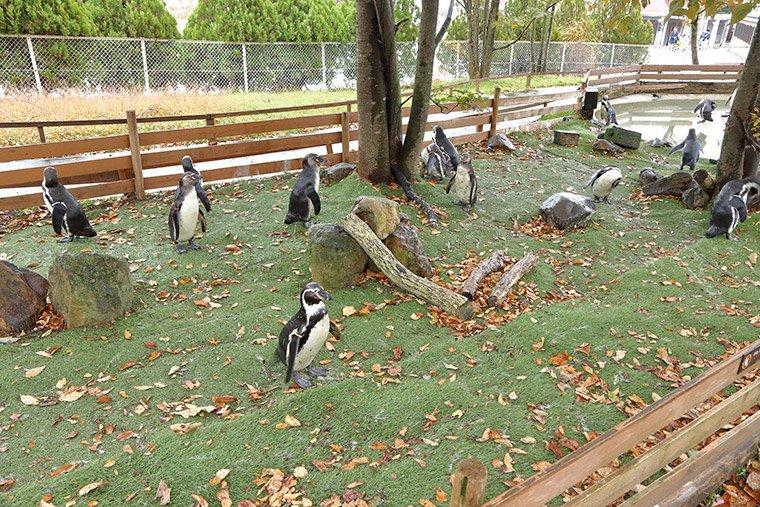 ペンギンビレッジの屋外展示