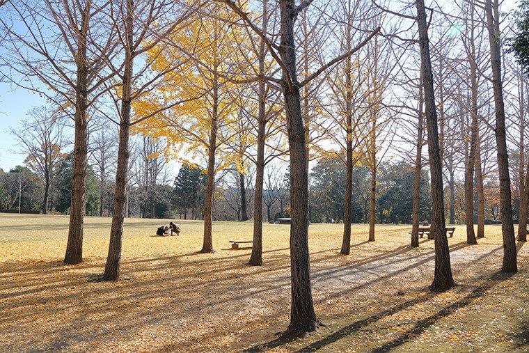 科学万博記念公園の芝生広場