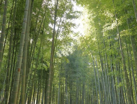 若山農場の竹林