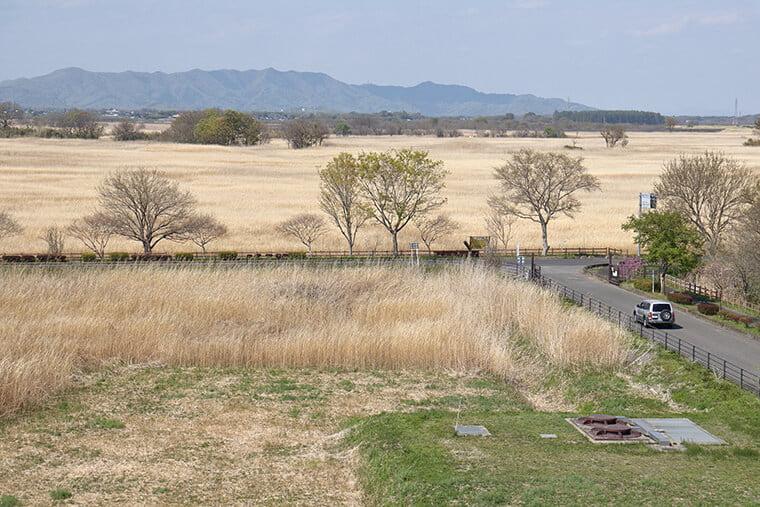 渡良瀬遊水地の風景