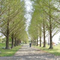 渡良瀬遊水地の並木道
