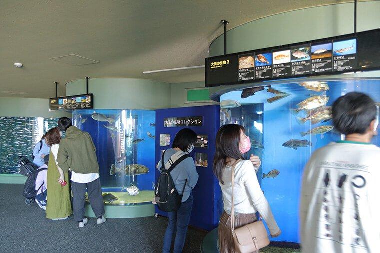 茨城の生物コレクション