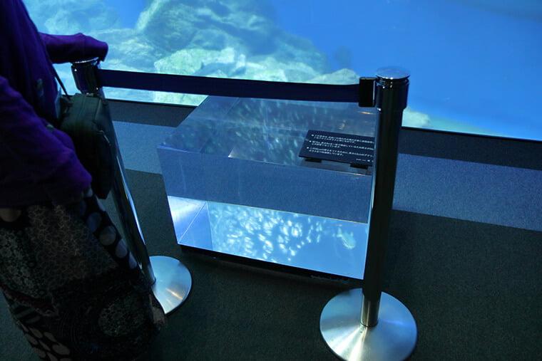 大水槽のアクリル版の見本