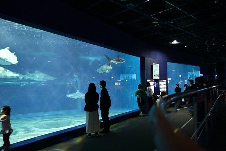 サメの大水槽
