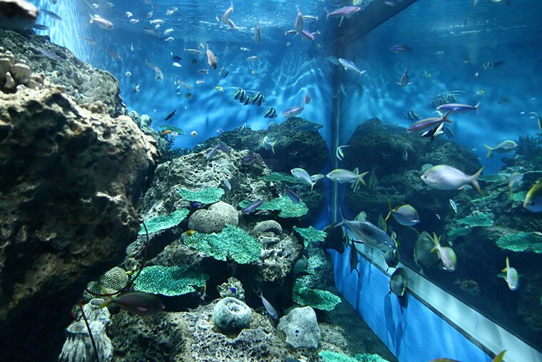 沖縄の海の水槽