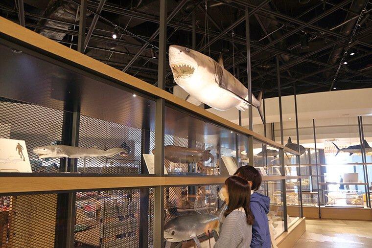 開館20周年リニューアルのサメミュージアム