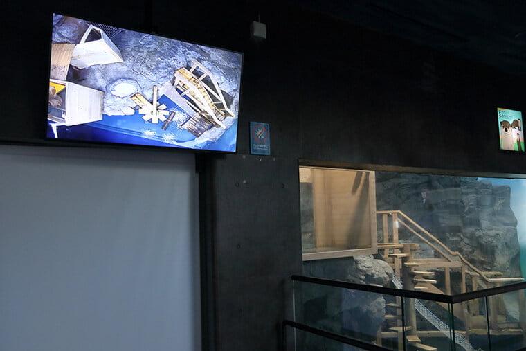 カワウソの展示水槽