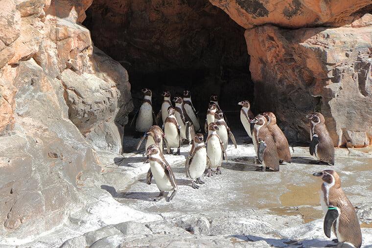 オーシャンゾーンのペンギン