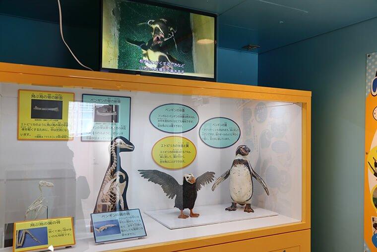 ペンギンの展示室