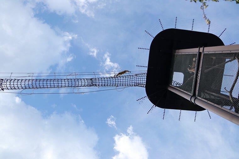 吊り橋を渡るクモザル
