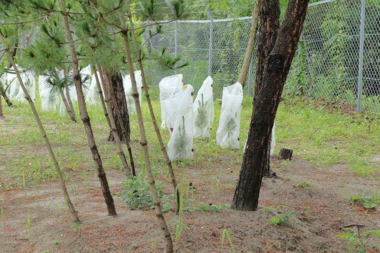 クロマツ林リジェネプロジェクト