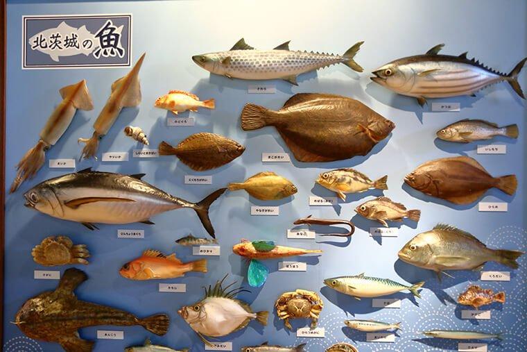 茨城県で獲れる魚紹介